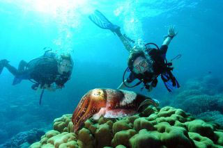 PADI Scuba Diver Course with Dive The World Thailand