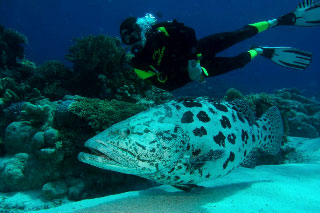 PADI Underwater Naturalist Specialty Course with Dive The World Thailand
