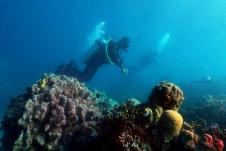 Have you seen the reef? PADI Underwater Navigator Specialty Course with Dive The World Thailand