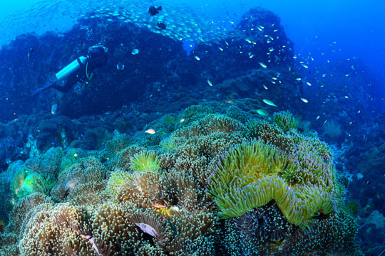 Koh tao scuba diving resort daytrips dive the world thailand - Dive in koh tao ...