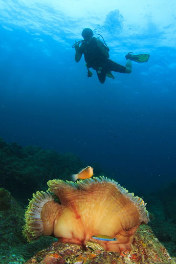 Koh phi phi scuba diving resort daytrips dive the world thailand - Where to dive in thailand ...