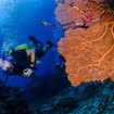 A diver passes a gorgonian sea fan, Khao Lak