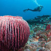 Discover Scuba Diving in Thailand