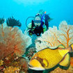 Titan triggerfish are common in Phuket