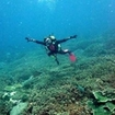 Advanced Open Water Diver in Krabi  - Peak Performance Buoyancy