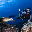 A diver photographs a turtle in Khao Lak