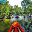 Canoe through the mangroves of Krabi