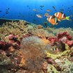 A vibrant coral reef scene from Thailand
