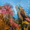Healthy reef scene from Surin Island