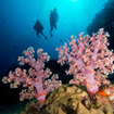 Phuket has some wonderful soft coral dive sites