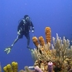 Phuket PADI Adventure Diver - Drift diving