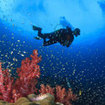 A diver with red soft corals at Hin Daeng in the south of Thailand
